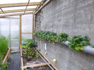 linee fragole e growbed