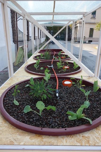 trapianti-nei-letti-di-coltivazione
